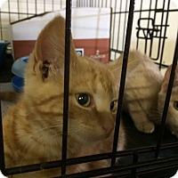 Adopt A Pet :: Parker - Byron Center, MI