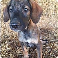 Adopt A Pet :: Bolden - Bedminster, NJ