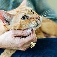 Adopt A Pet :: Beau - Durham, NC
