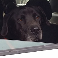 Adopt A Pet :: Bartholomew - Simsbury, CT