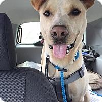 Adopt A Pet :: Judd - Stoneham, ME