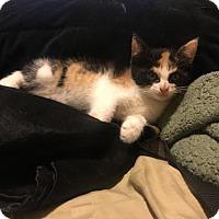 Adopt A Pet :: Tango - ADOPTION PENDING - Livonia, MI