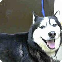 Adopt A Pet :: URGENT on 07/01 BIG BEAR - San Bernardino, CA