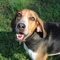 Adopt A Pet :: Duncan - North Myrtle Beach, SC