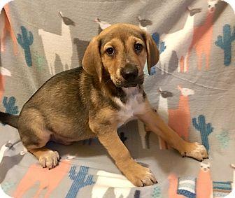 Hound (Unknown Type) Mix Puppy for adoption in Atlanta, Georgia - Zeke