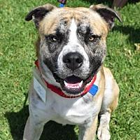 Adopt A Pet :: Judd - San Diego, CA