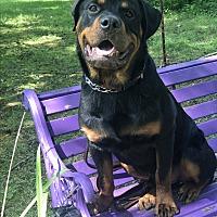 Adopt A Pet :: Otto - Long Beach, NY