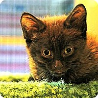 Adopt A Pet :: Olive - Victor, NY