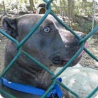 Adopt A Pet :: Steel - Wanaque, NJ