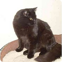 Adopt A Pet :: Secretariat - Syracuse, NY