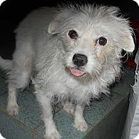 Adopt A Pet :: Terrie - dewey, AZ