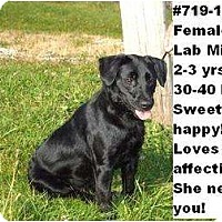 Adopt A Pet :: # 719-11 - ADOPTED! - Zanesville, OH