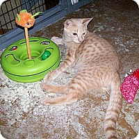 Adopt A Pet :: Hansel - Scottsdale, AZ
