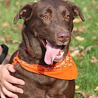 Adopt A Pet :: Latte - SOUTHINGTON, CT