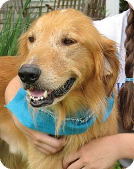 Golden Retriever Dog for adoption in Port St. Joe, Florida - DIAMOND