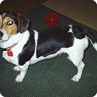Adopt A Pet :: Roxie - cedar grove, IN