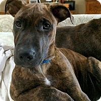 Adopt A Pet :: Marmadukey - Cary, IL