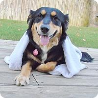 Adopt A Pet :: *Trixie - PENDING - Westport, CT