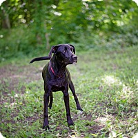 Adopt A Pet :: Oreo - Lewisville, IN