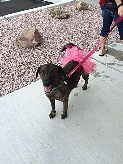 Shepherd (Unknown Type)/Collie Mix Dog for adoption in Mechanicsburg, Pennsylvania - Brynn