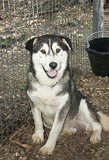 Husky Mix Dog for adoption in Poland, Indiana - Freddy