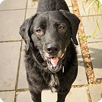 Adopt A Pet :: Larry - Lancaster, PA