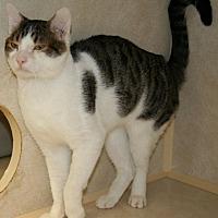 Adopt A Pet :: Safrit - Salisbury, NC