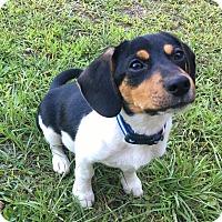 Adopt A Pet :: Owen - South Dennis, MA