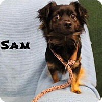 Adopt A Pet :: Sam - Newport, KY