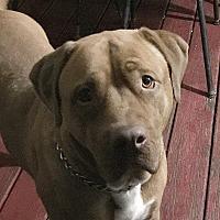 Adopt A Pet :: Charlie - Clarksville, TN