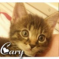 Adopt A Pet :: Cary - Columbia, SC
