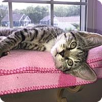 Adopt A Pet :: Jaclyn - Manchester, CT