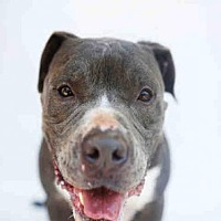 Adopt A Pet :: DULLEY - Los Angeles, CA