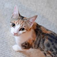 Adopt A Pet :: Whitney Houston - St. Louis, MO