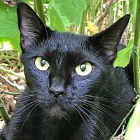 Adopt A Pet :: Luna - Dallas, TX
