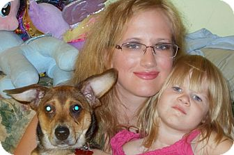 Dachshund Mix Puppy for adoption in Plain City, Ohio - Smokey