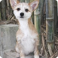 Adopt A Pet :: Petey - North Palm Beach, FL