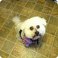 Adopt A Pet :: Fozzi Bear - Southampton, PA