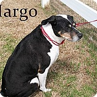 Adopt A Pet :: Margo - justin, TX