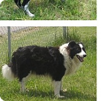Adopt A Pet :: Max - Conway, AR