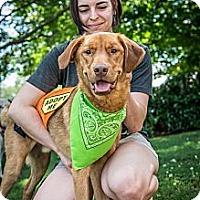 Adopt A Pet :: Reuben - Cumming, GA