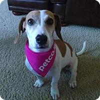 Adopt A Pet :: Carmel - Phoenix, AZ