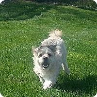 Adopt A Pet :: Marley - Mt Gretna, PA