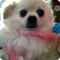 Adopt A Pet :: Alyssa - Gilbert, AZ