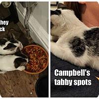 Adopt A Pet :: Campbell - St. Louis, MO