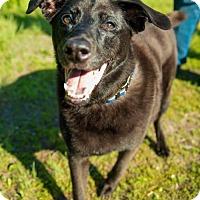 Adopt A Pet :: Benz - St. Cloud, MN