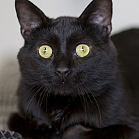 Adopt A Pet :: Saturn - Chicago, IL