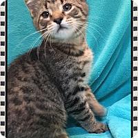 Adopt A Pet :: Vito - Mt. Prospect, IL