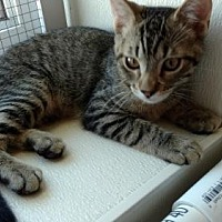 Adopt A Pet :: Milo - South Amana, IA