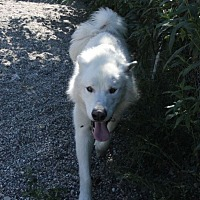 Adopt A Pet :: Grimm - North Pole, AK